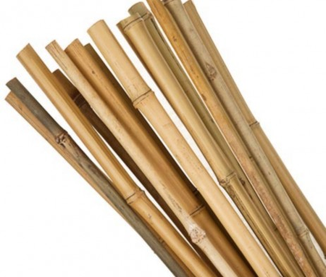 Bamboo_Canes