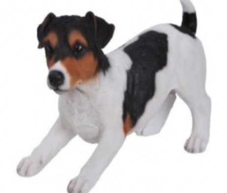 tri_jack_russell